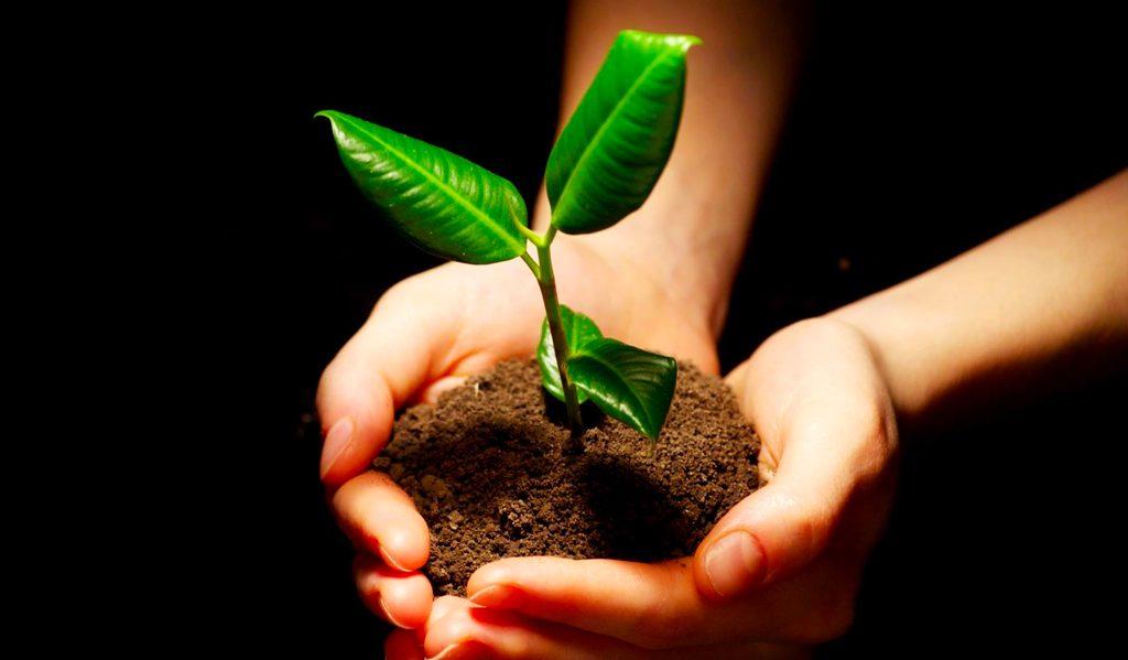 Plantar Esperança na Póvoa de Lanhoso